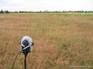 Recording setup -grasshoppers 2