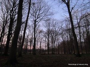 The forest is much more open without the leafs - December, Dyrehaven