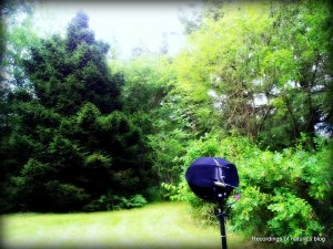 The field recording head in the summer back garden