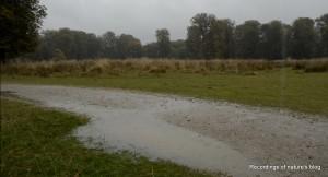 Dense autumn rain in Dyrehaven