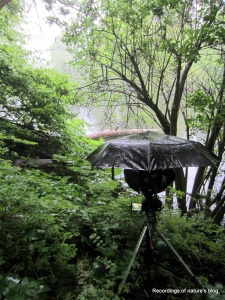Recording setup in the rain, Østre Anlæg Copenhagen