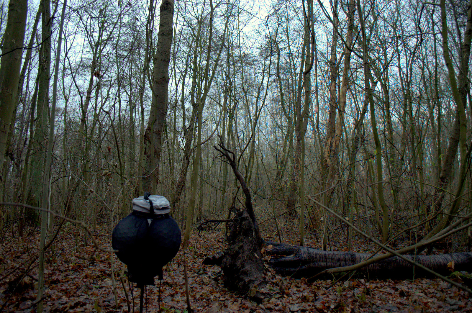 Winter forest sounds, Christmas day   Recordings of nature's Blog