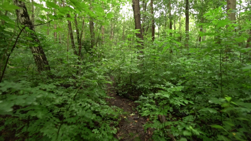 Recordings of nature's Blog | about audio recordings of nature